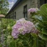 Torburnlea's beautiful garden